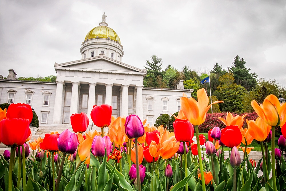 Montpelier statehouse, white columned building with a gold dome and multi colored Tulips in the foreground